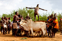 "Young Hamer man Jumping the Bulls ceremony. Marriage ""rights of passage"". Keske. Ethiopia,Africa."
