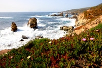 Breaking waves and flowers. Garrapata State Park. View towards North. Entrance #7. California, US.