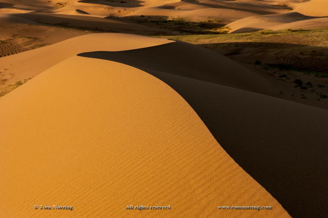Sand Dune at sunrise. Gobi desert. Mongolia.