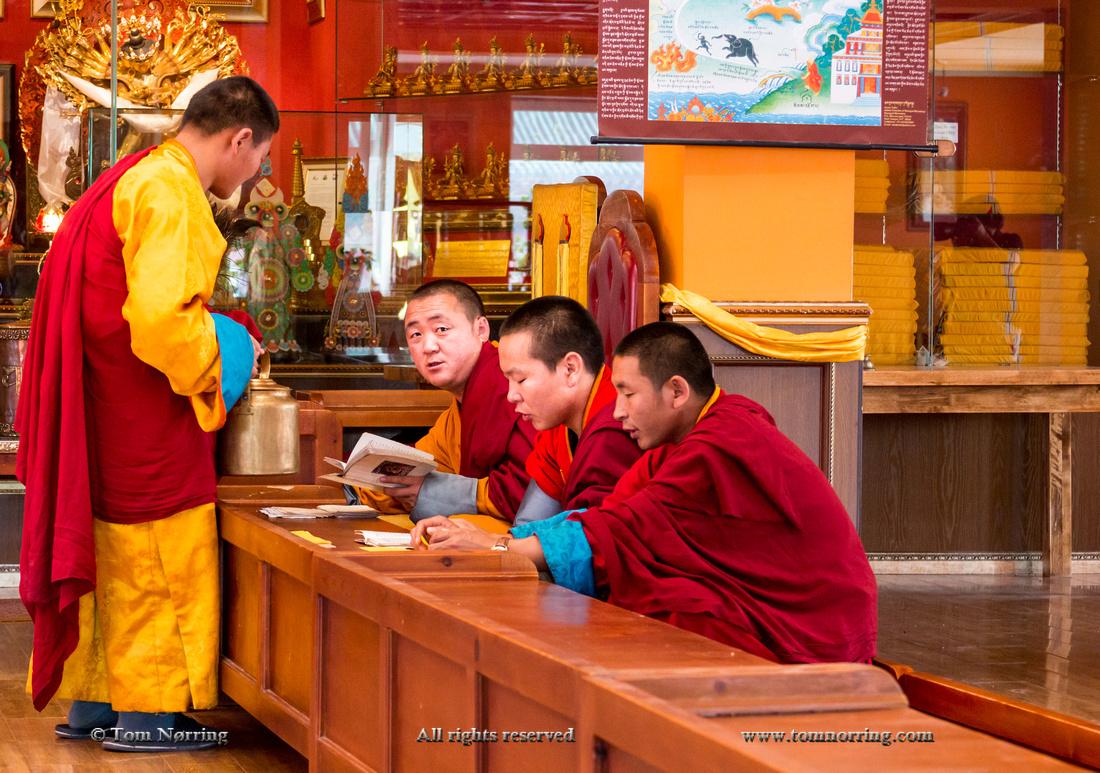 Monks studying at Gandan Monastery, Mongolia's largest functioning monastery,Mongolia,Ulaanbaator