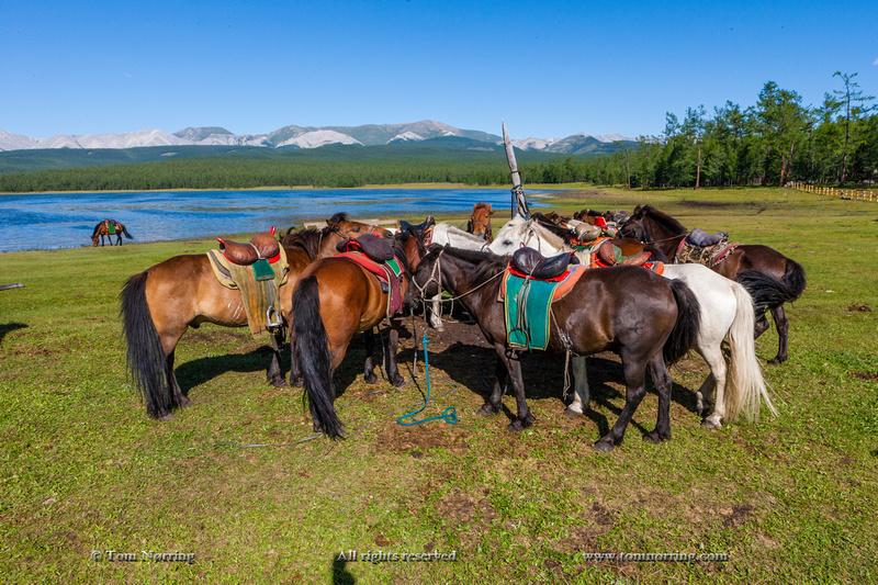 Ger Camp horse riding. Lake Hovsgol, Mongolia.