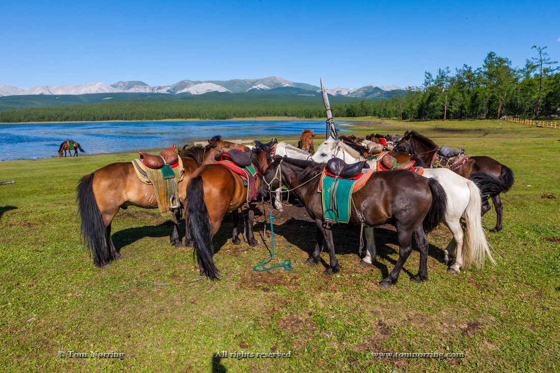 Ger Camp horse riding. Lake Hovsgol, Mongolia.