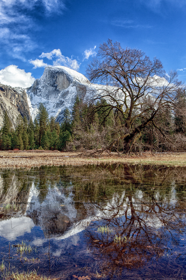 Half Dome with reflections seen from Cooks Meadow. Yosemite National Park. California.