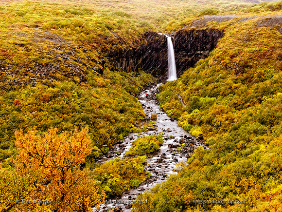 Svartifoss (Black Fall), a 20m waterfall surrounded by hanging hexagonal basalt columns and by dark lava . Skaftafell National Park, Iceland.
