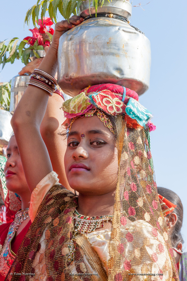 Woman in Sari carrying heavy burden on head. Festival parade. Desert festival. Jaisalmer. Rajasthan. India.